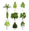 set of green garden trees nature vector image