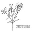 doodle plants carnation medicinal plant vector image vector image