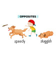 english vocabulary opposite word vector image vector image