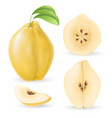 realistic quince set vector image