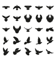 figure a doves pigeon on white background vector image