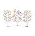 aspen trees vector image