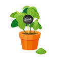 basil poster plant with table vector image