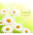 beautiful daisies background vector image vector image