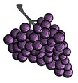 isolated vintage grapes vector image vector image