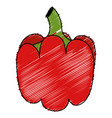 pepper fresh isolated icon vector image vector image