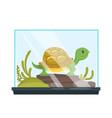 animal pet - turtle in terrarium vector image vector image