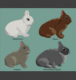 composition four easter rabbit vector image
