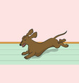 dachshund dog running vector image