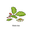 mate tea leaves drawing isolated on white vector image