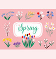 early spring forest and garden flowers isolated vector image