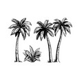 tropical coconut palm trees black and white hand vector image vector image