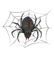 Black big scary spider sitting center of web vector image
