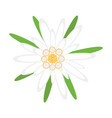 edelweiss flower symbol german oktoberfest vector image vector image