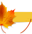 banner with a maple leaf vector image vector image