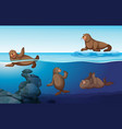 ocean scene with four seals swimming vector image