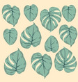 simple seamless pattern of leaves monstera green vector image vector image