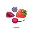 colorful berry drawing set - hand drawn strawberry vector image