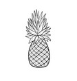 pinaplle sketch tropical fruit doodle isolated vector image
