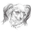 russian long-haired toy terrier hand drawing vector image vector image