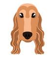 cocker spaniel avatar vector image