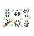 cute pandas characters set adorable animals in vector image