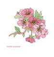 decorative cherry blossom vector image vector image
