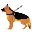 german shepherd guide dog vector image