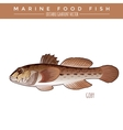 Goby Marine Food Fish vector image vector image