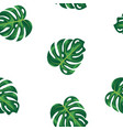 pattern green leaves of tropical plant and tree on vector image vector image