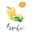 sweet pepper vector image vector image