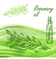 rosemary oil set hand drawn rosemary plant on vector image vector image