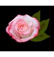 beautiful pink rose vector image vector image