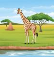 cartoon giraffe in savannah vector image vector image