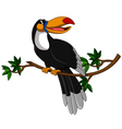 cute toucan sitting on tree vector image