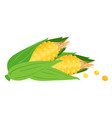 fruit icon corn white background image vector image vector image