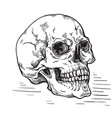 hand drawn sketch anatomic skull vintage vector image