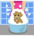 pet groomer washing dog with soap foam vector image vector image