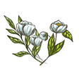 realistic flowers and leaves hand drawn colorful vector image vector image