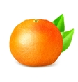 Ripe whole grapefruit with leaves vector image vector image