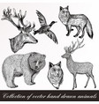 set detailed hand drawn animals vector image vector image