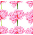 watercolor pink peony seamless pattern botanical vector image