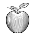 engraving apple vector image vector image