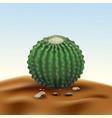 realistic desert big round cactus echinocactus vector image