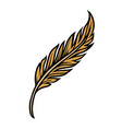 gold feather colorful concept vector image vector image