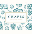 hand drawn grapes card abstract vector image