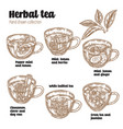 hand drawn various herbal tea recipe for health vector image vector image
