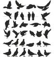 pigeon silhouettes bird vector image