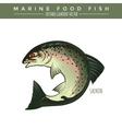 Salmon Marine Food Fish vector image vector image