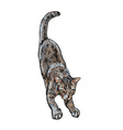 Adorable cute cat stretching body vector image vector image